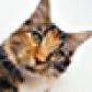 @diagonalcat