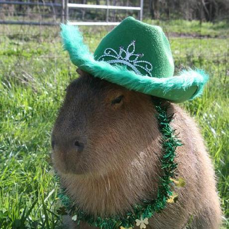 Daniel Hsing