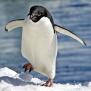 @The-Penguin
