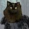 @polka-dot-cat