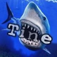 Tine81