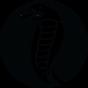 @Cobra-Bitcoin