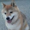 @yukimori