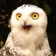 @Crazy-Owl