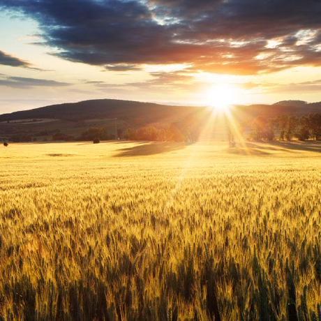s57445560 - 我们的人生就像向日葵!永远向着太阳,只有夜晚才低下头,这时候才是自己吧。