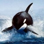 @deep-orca