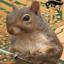 @Squirrel61