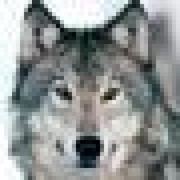 @jwolff52