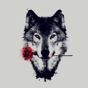 @bhediathewolf