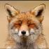 @happy-fox-2017