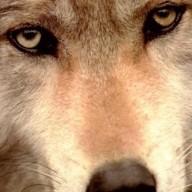 Jonathan 'Wolf' Rentzsch