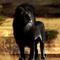 @Black-Prince