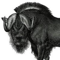 @emacs-web-kit