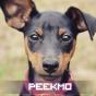 @Peekmo