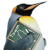 Linux Taiwan logo