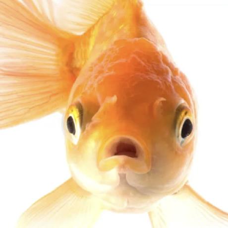 shimfish