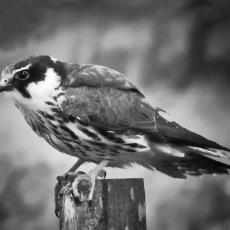 booleanbird
