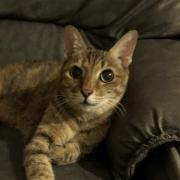 @ymcheung