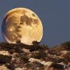 bravekingzhang