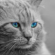@zahedomid