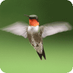 @birdie-github