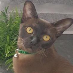 GitHub - JellyWX/reminder-bot: reminder-bot source for Discord