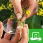 Wageningen UR Plant Breeding