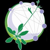 @Arabidopsis-Information-Portal