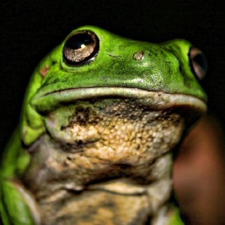 greenbigfrog