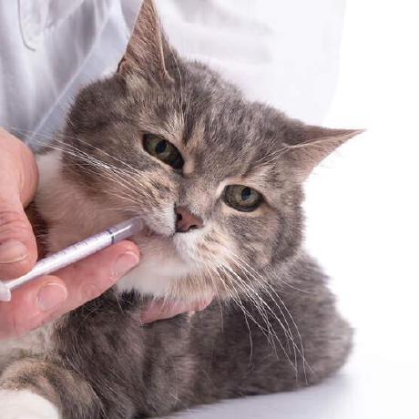b31ngD3v
