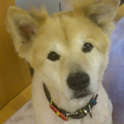 Dog lover stationery gift. Mike Sibley Golden Retriever Letter Opener