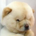 @wushenchao